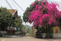 Streets painted pink by the street flowers