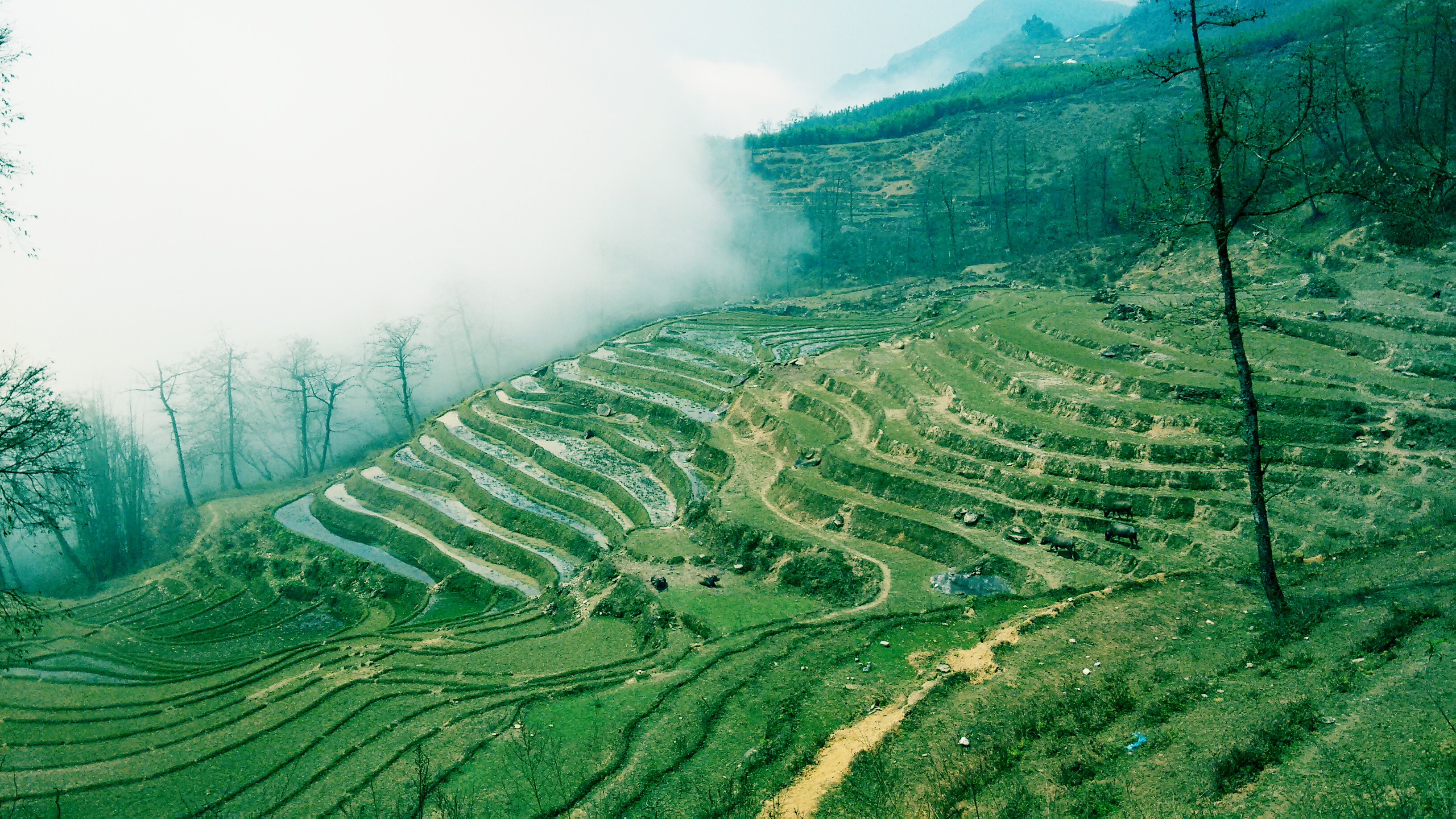 The Sa Pa Saga of the Rice Terraces - Trails and Frames